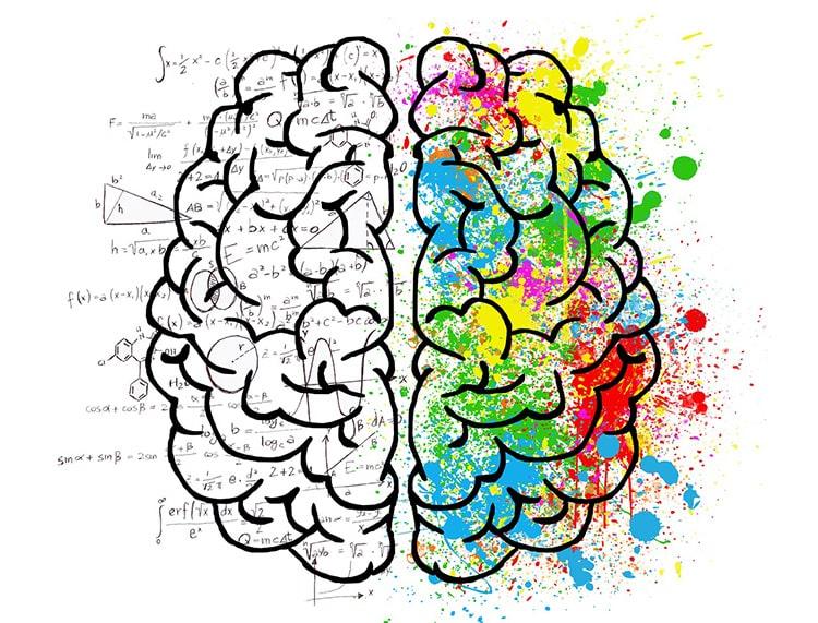мозг женщины и мужчины